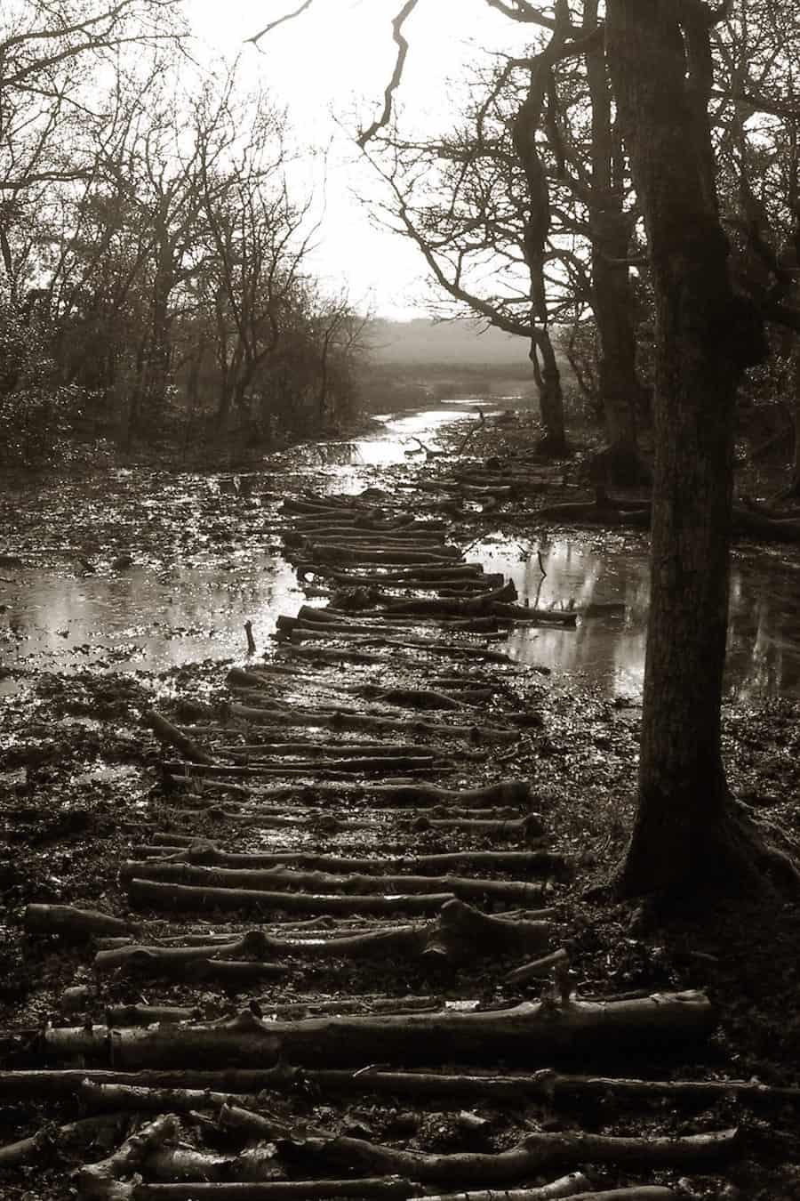 Der Dienstweg ist der Holzweg!
